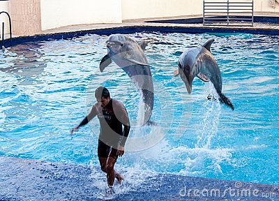 Dolphins in Cancun Aquarium Mexico Editorial Photo