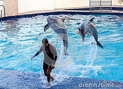 Dolphins in Cancun Aquarium Mexico Editorial Photo