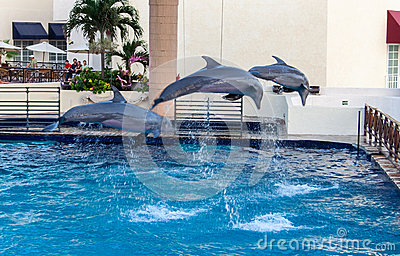 Dolphins in Cancun Aquarium Mexico Editorial Photography