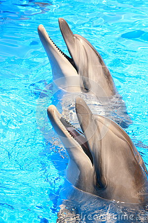 Dolphins Heads : Smiles - Stock Picture