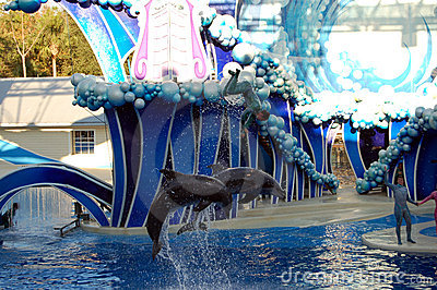 Dolphins jumping with trainer Editorial Stock Photo