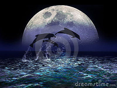 Dolphins and Moon
