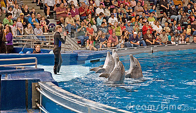 Dolphins Perform With Woman Trainer Editorial Image