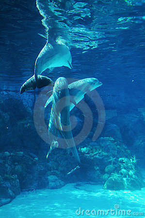 Free Dolphins Playing Stock Photos - 5040993