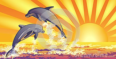 The dolphins in the sea