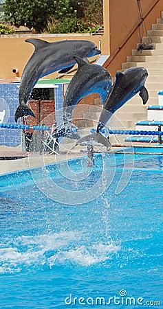 Free Dolphins Show Stock Photos - 10819723