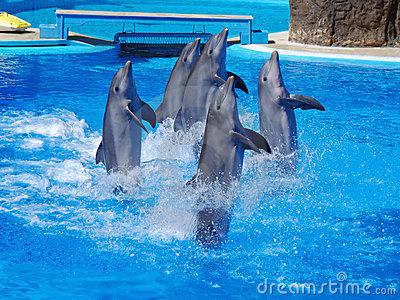 Dolphins show with dancing dolphins