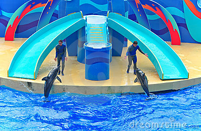 Dolphins show at ocean park hong kong Editorial Stock Image