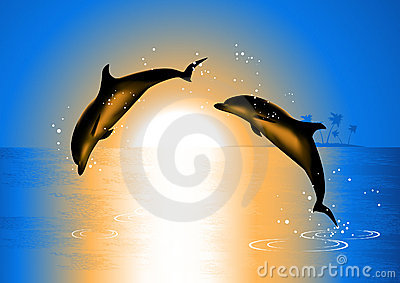 Dolphins in the sunset