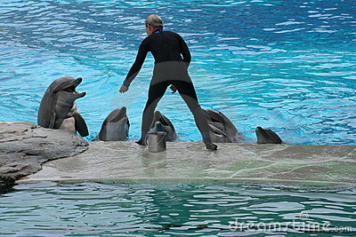 Dolphins & Trainer