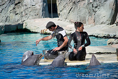 Dolphins and trainers Editorial Image