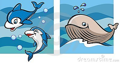 Dolphins and whale
