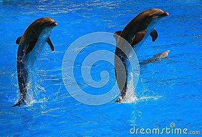 Dolpin jumping