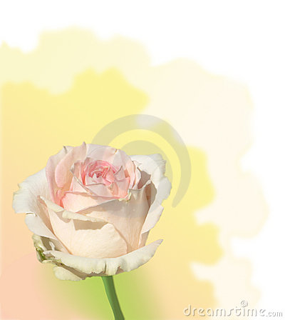 Dome cor-de-rosa