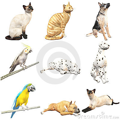 Domestic Animals(with Clipping Paths)