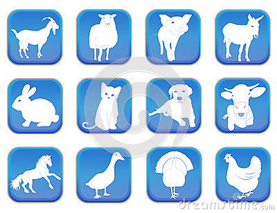 Domestic animals 1