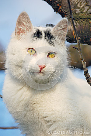 Domestic Cat Royalty Free Stock Image - Image: 25854036