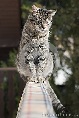 Free Domestic Cat Stock Photos - 50379283