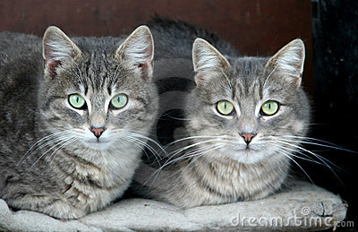 Domestic cats
