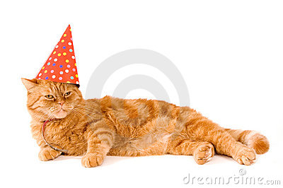 Domestic red cat is having a party