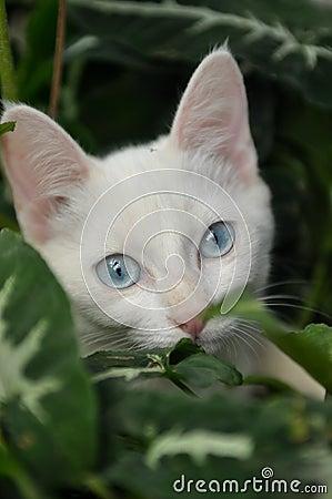 Domestic white cat in the garden