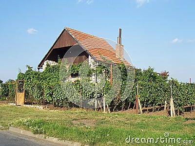 Domowy pobliski winnica