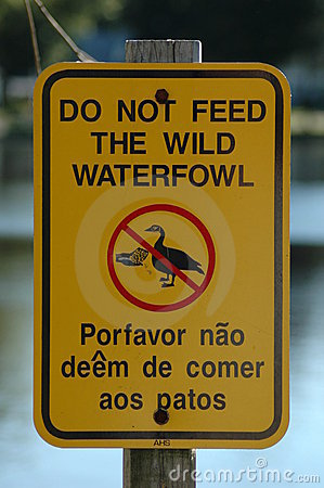 Free Don T Feed Ducks Royalty Free Stock Photo - 13615