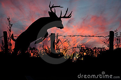 Don T Fence Me In White Tail Buck Stock Image Image 18092521