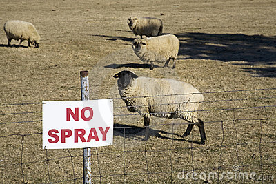Don t spray sign with sheep