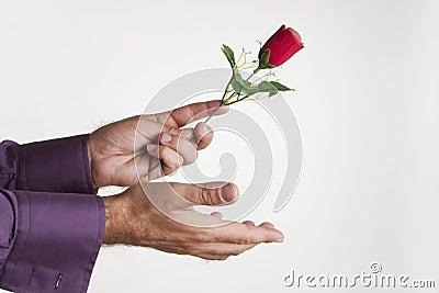 Donante de amor