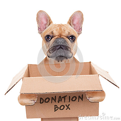 Free Donation Box Dog Stock Photography - 46908612