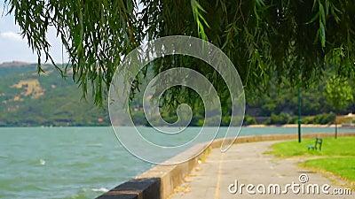 Donau im Sommer mit Weidenbaum und -wind stock video