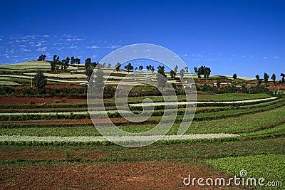 Dongchuan红色土壤