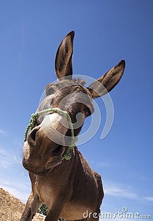 Free Donkey Royalty Free Stock Photo - 16249095