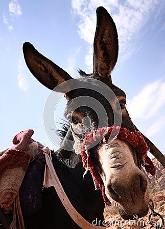 Free Donkey Royalty Free Stock Images - 16694499