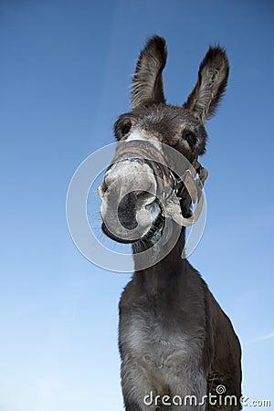 Free Donkey Royalty Free Stock Image - 18383576