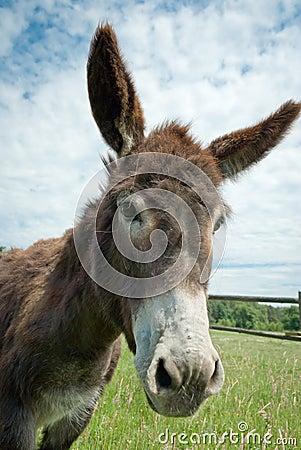 Free Donkey Stock Photography - 20495732