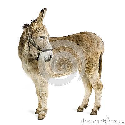 Free Donkey Royalty Free Stock Photos - 2244338