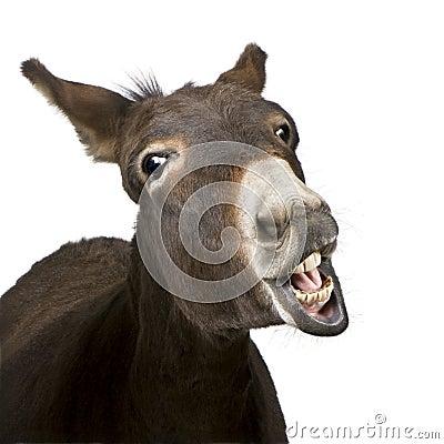 Donkey (4 years)