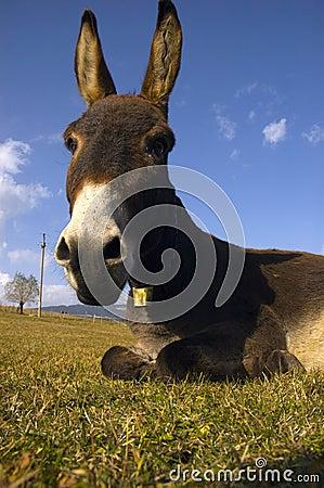 Free Donkey Stock Image - 7090501