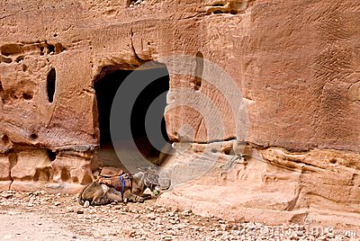 Donkey in ancient city of Petra