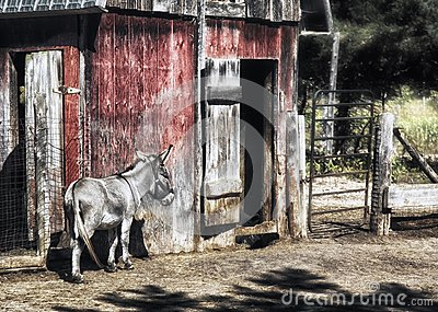 Donkey and Barn