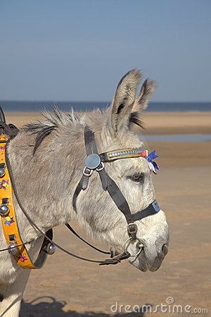 Donkey at a beach resort
