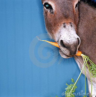 Free Donkey Chewing Carrot Stock Images - 17380924