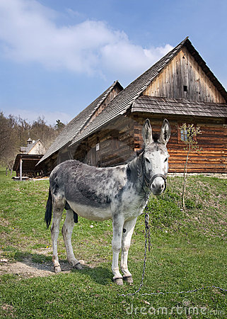 Donkey in countryside