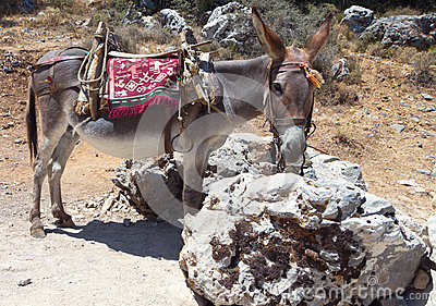 Donkey at Crete island, Greece