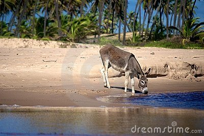 Donkey drinking water