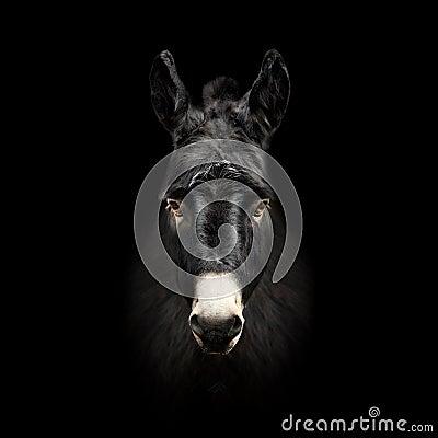 Free Donkey Face Isolated On Black Background Royalty Free Stock Images - 88296099