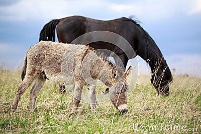 Donkey and horse