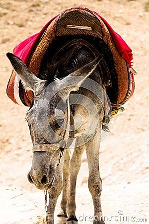 Free Donkey In Judean Desert Royalty Free Stock Photos - 52707308